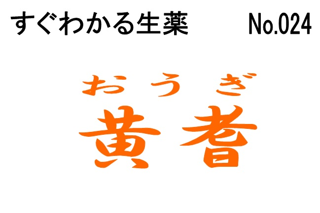 024黄耆